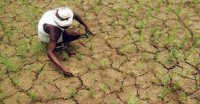 महाराष्ट्र : मानसूनी बारिश सामान्य से कम होने के कारण सूखे जैसे हालात
