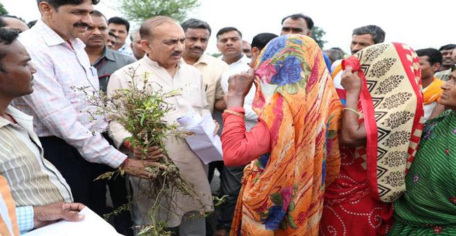 मध्यप्रदेश के वाणिज्य कर मंत्री बीएस राठौर ने निवाड़ी जिले में अतिवृष्टी से खराब हुई फसलों का जायजा लिया